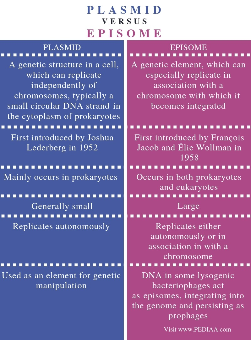 Difference Between Plasmid and Episome - Comparison Summary