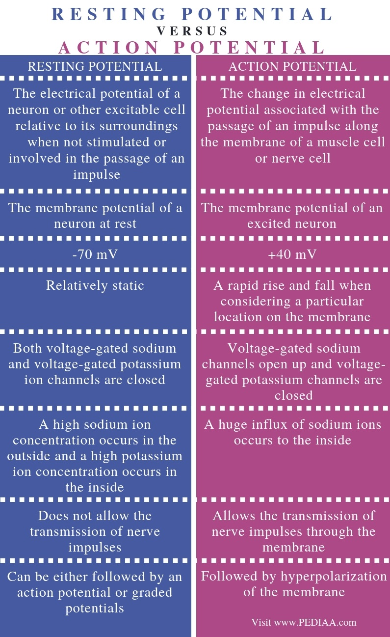Difference Between Resting Potential and Action Potential - Comparison Summary