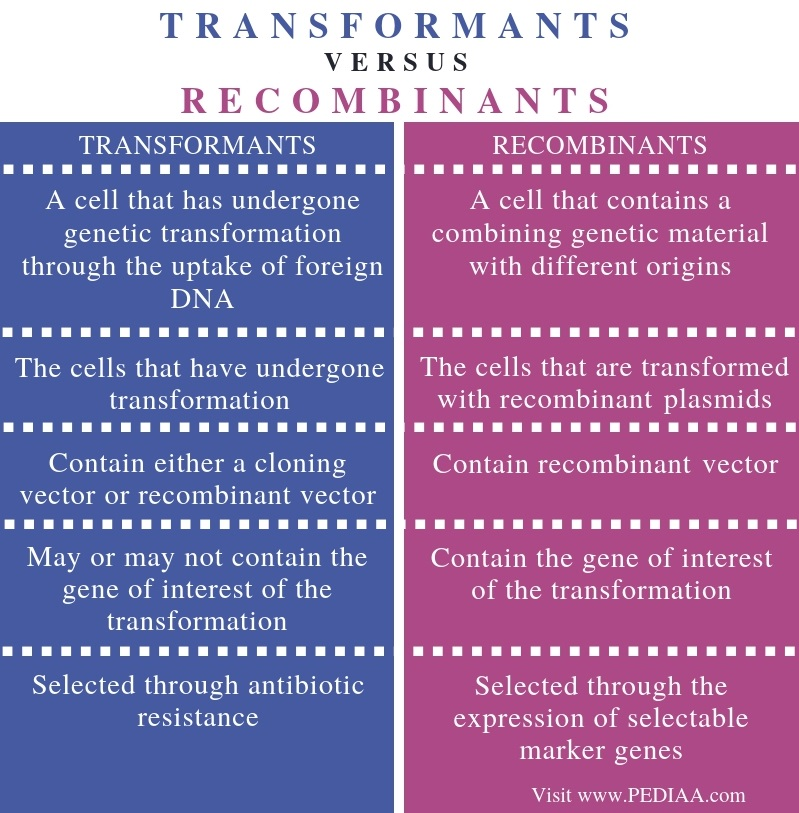 Difference Between Transformants and Recombinants - Comparison Summary