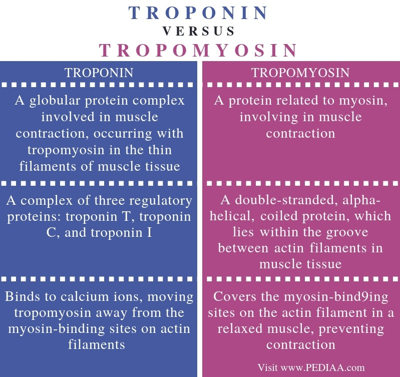 What Is The Difference Between Troponin And Tropomyosin