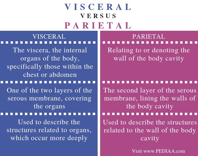 Difference Between Visceral and Parietal - Comparison Summary