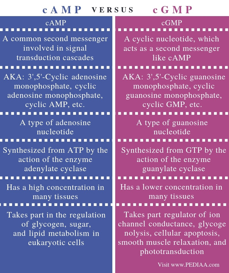 Difference Between cAMP and cGMP - Comparison Summary