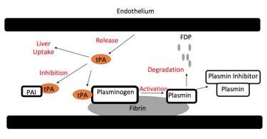Difference Between Alteplase and Tenecteplase