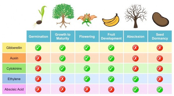 What is the Difference Between Animal and Plant Hormones