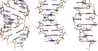 Difference Between B DNA and Z DNA