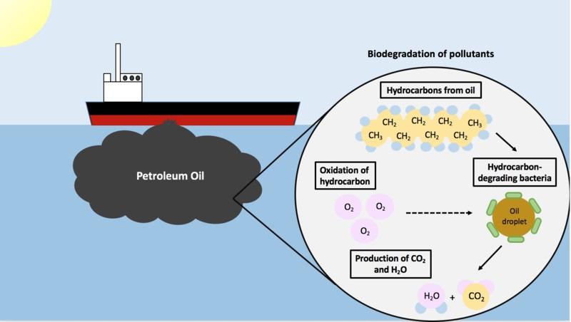 Biodegradation vs Bioremediation