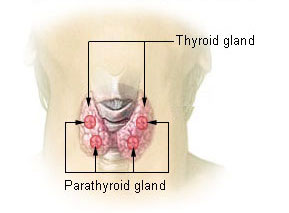 Difference Between Calcitonin and Parathyroid Hormone