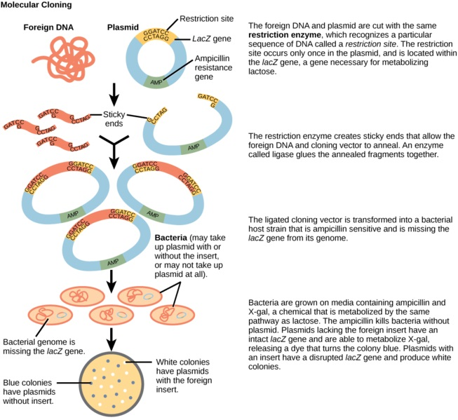 Cytogenetics vs Molecular Genetics