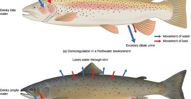 Difference Between Excretion and Osmoregulation