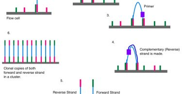 What is the Difference Between Sanger and Next Generation Sequencing
