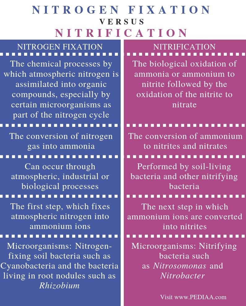 Difference Between Nitrogen Fixation and Nitrification - Comparison Summary