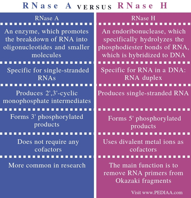 Difference Between RNASE A and RNASE H - Comparison Summary