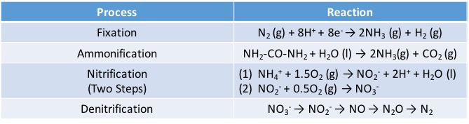 Nitrogen Fixation vs Nitrification