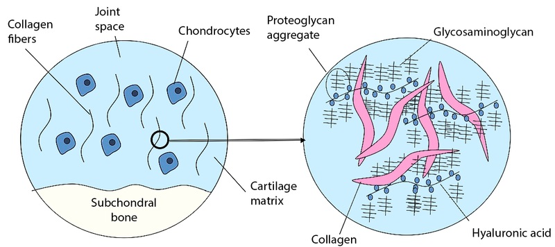 Difference Between Collagen 1 2 and 3