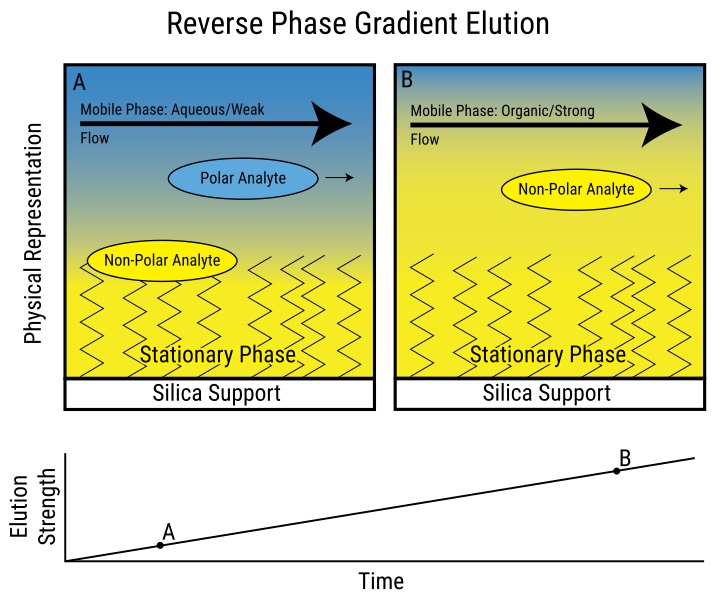 Difference Between Normal Phase and Reverse Phase Chromatography