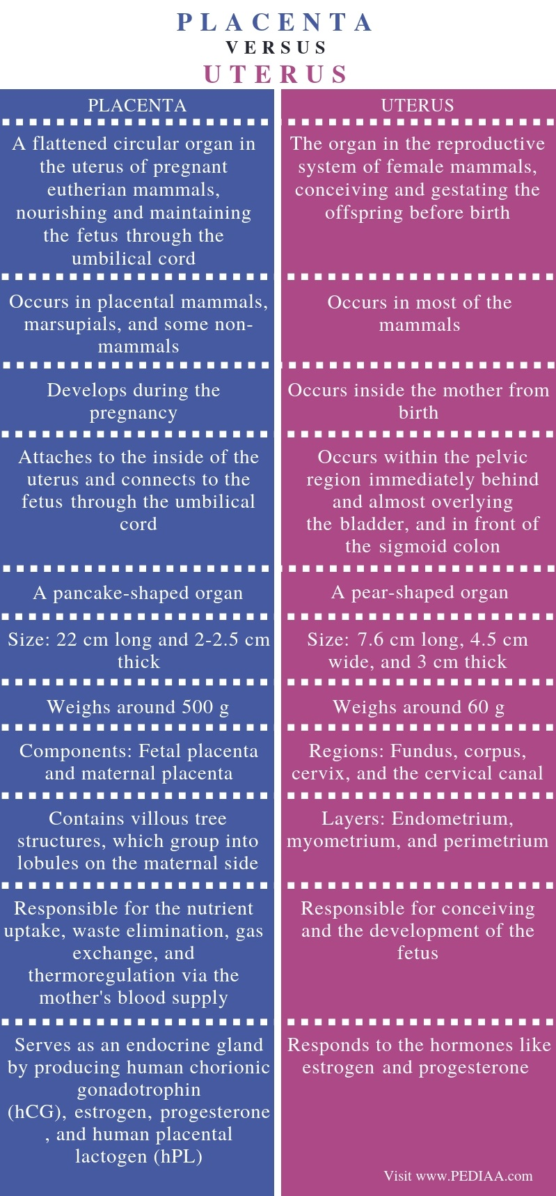 Difference Between Placenta and Uterus - Comparison Summary