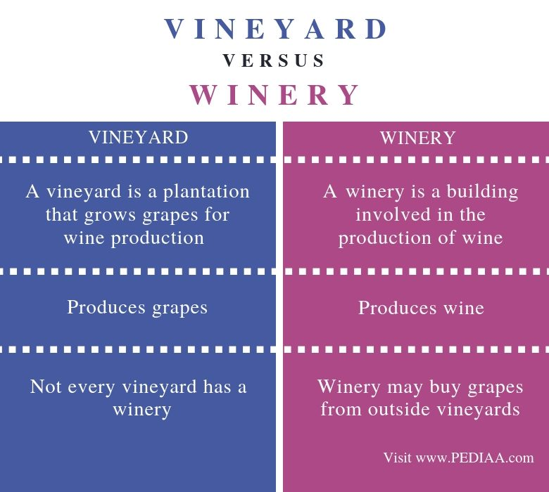 Difference Between Vineyard and Winery - Comparison Summary