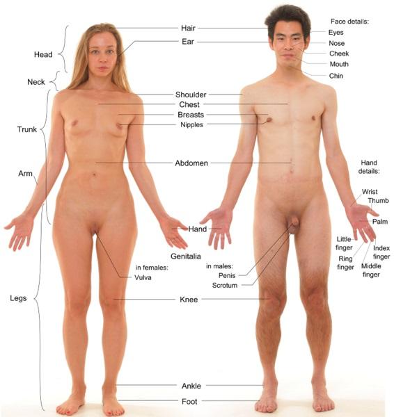 Male vs Female Fetus