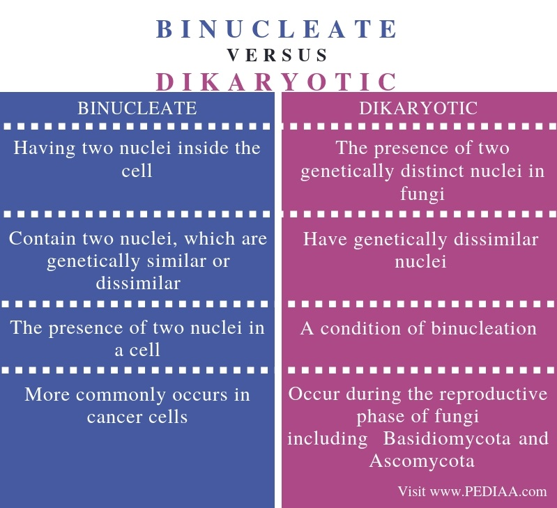 Difference Between Binucleate and Dikaryotic - Comparison Summary