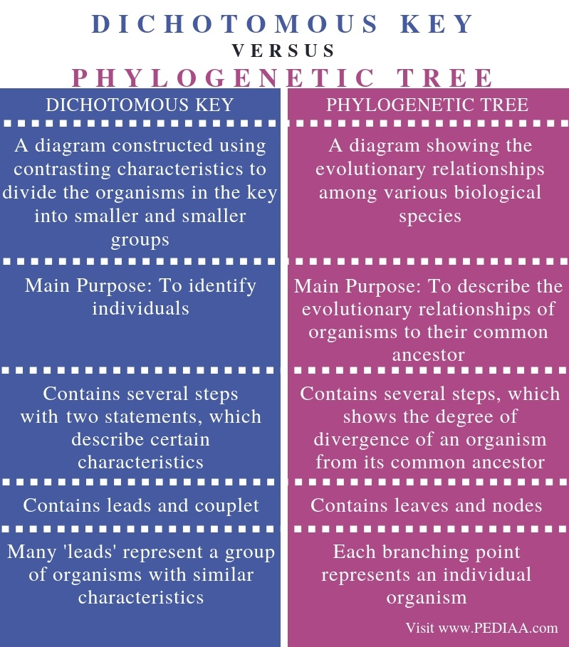 Difference Between Dichotomous Key and Phylogenetic Tree - Comparison Summary