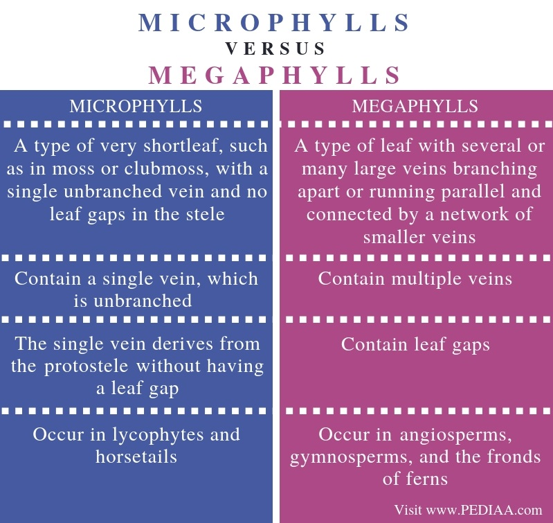 Difference Between Microphylls and Megaphylls - Comparison Summary