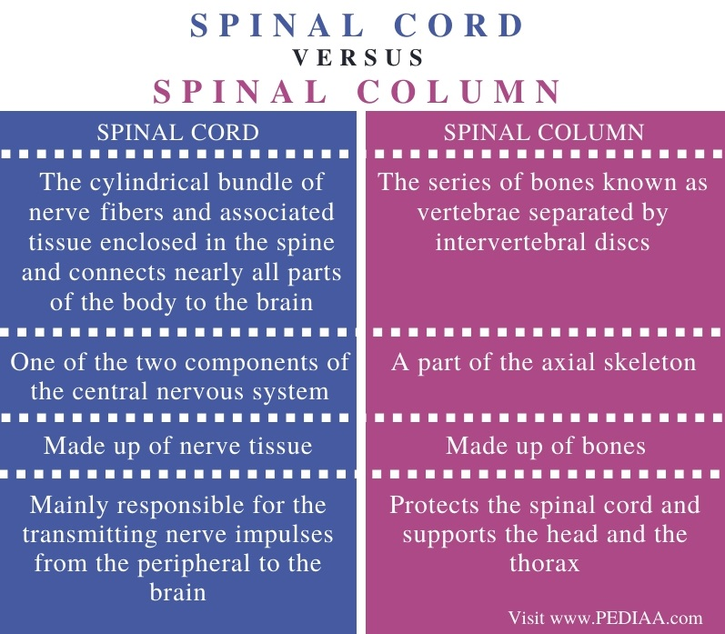 Difference Between Spinal Cord and Spinal Column - Comparison Summary