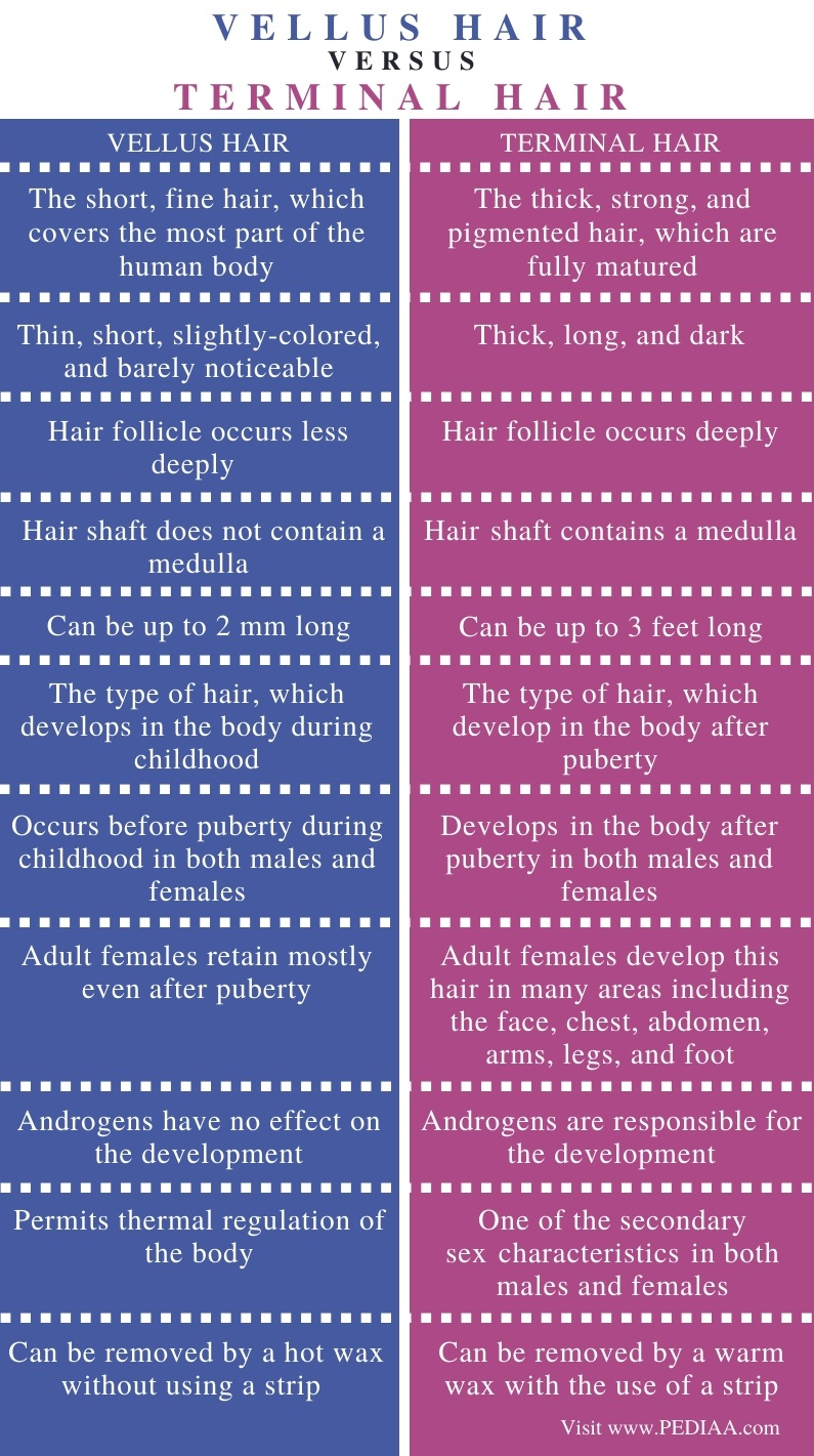 Difference Between Vellus and Terminal Hair - Comparison Summary