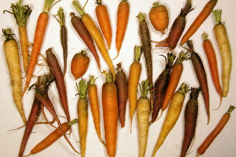Difference Between Alpha and Beta Carotene