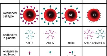 What is the Difference Between Antigen A and Antigen B