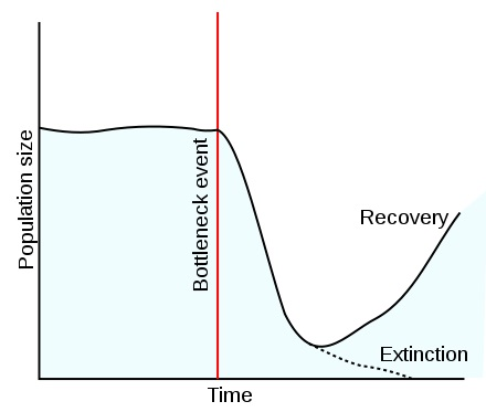 Main Difference - Founder Effect vs Bottleneck Effect