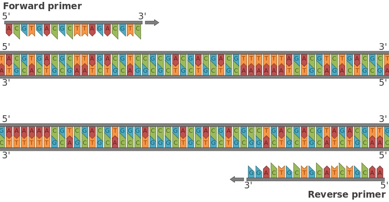 Difference Between PCR Primers and Sequencing Primers