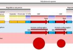 Difference Between Prokaryotic and Eukaryotic mRNA