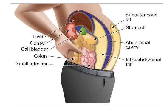 Difference Between Visceral and Subcutaneous Fat