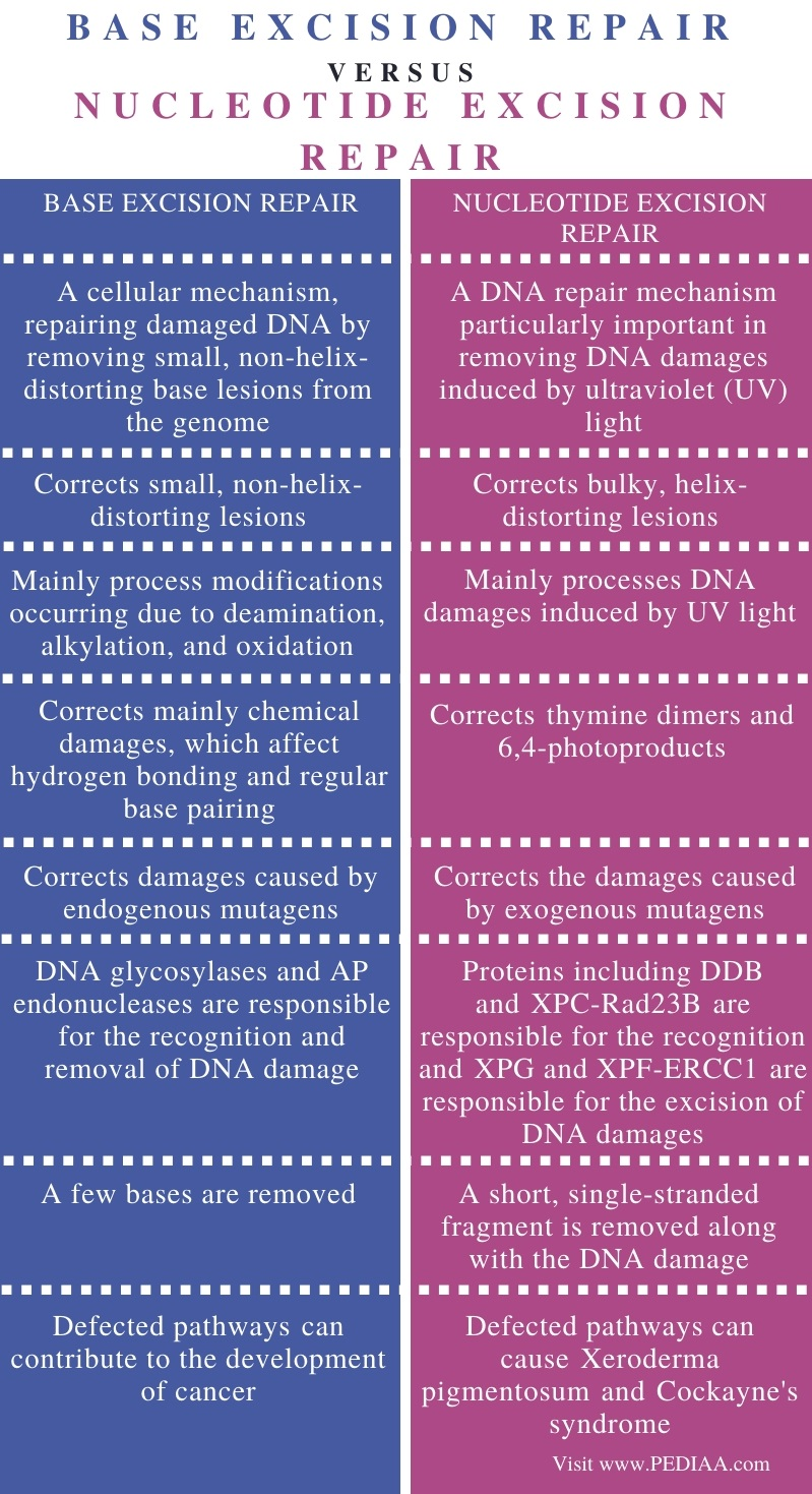 Difference Between Base Excision Repair and Nucleotide Excision Repair - Comparison Summary