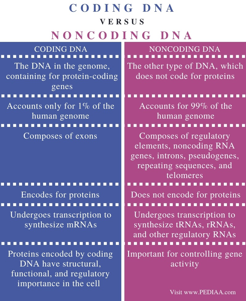 Difference Between Coding and Noncoding DNA - Comparison Summary
