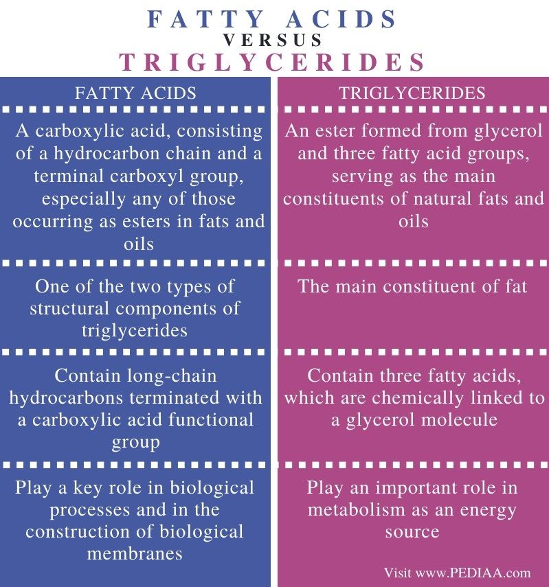 Difference Between Fatty Acids and Triglycerides - Comparison Summary
