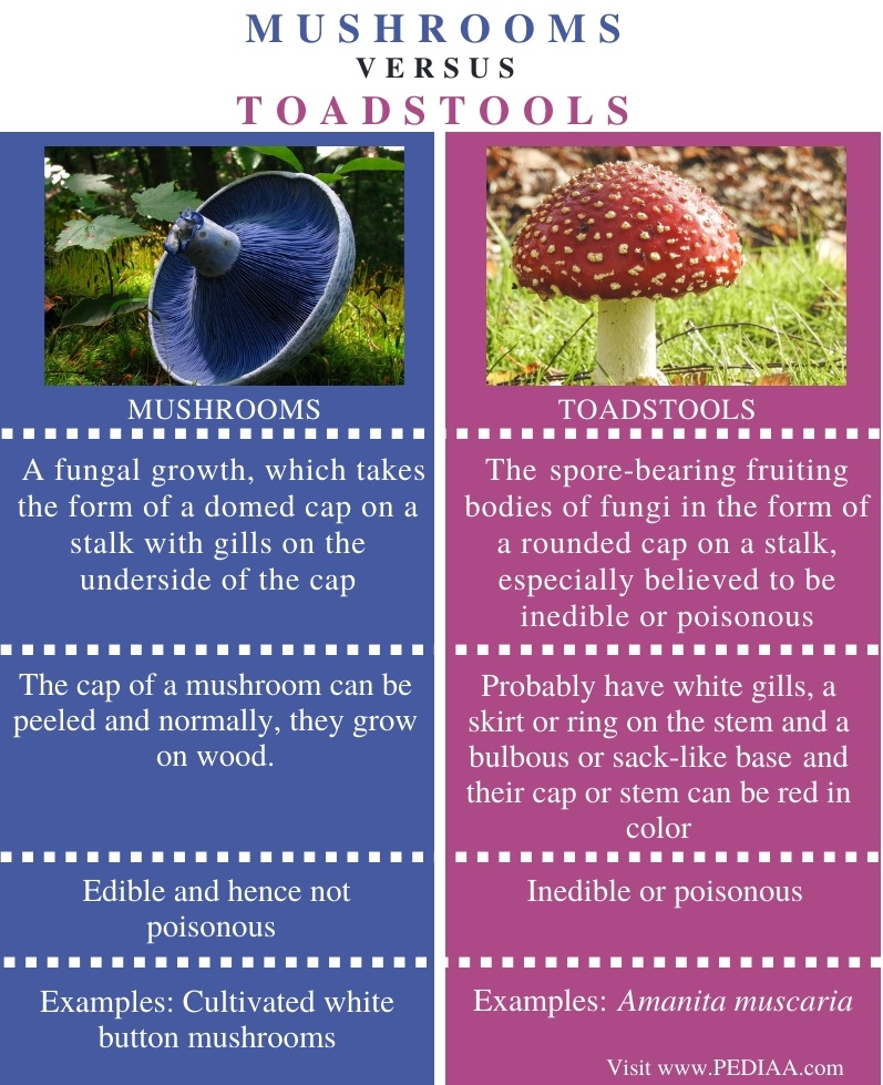 Difference Between Mushrooms and Toadstools - Comparison Summary