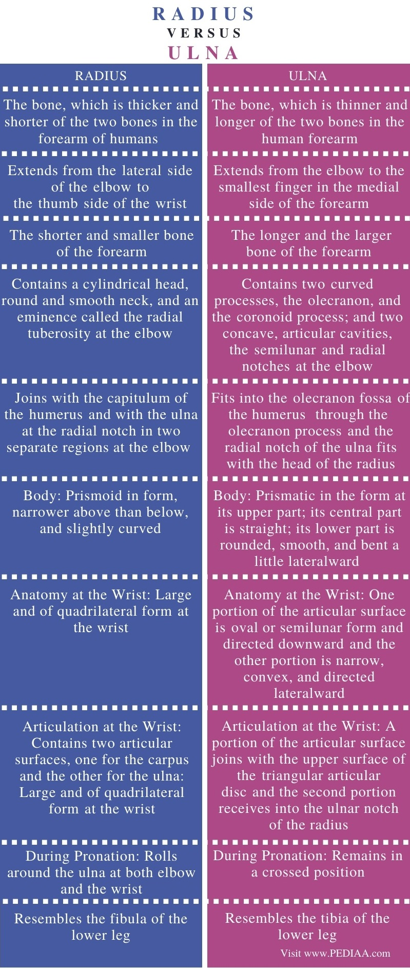 Difference Between Radius and Ulna - Comparison Summary