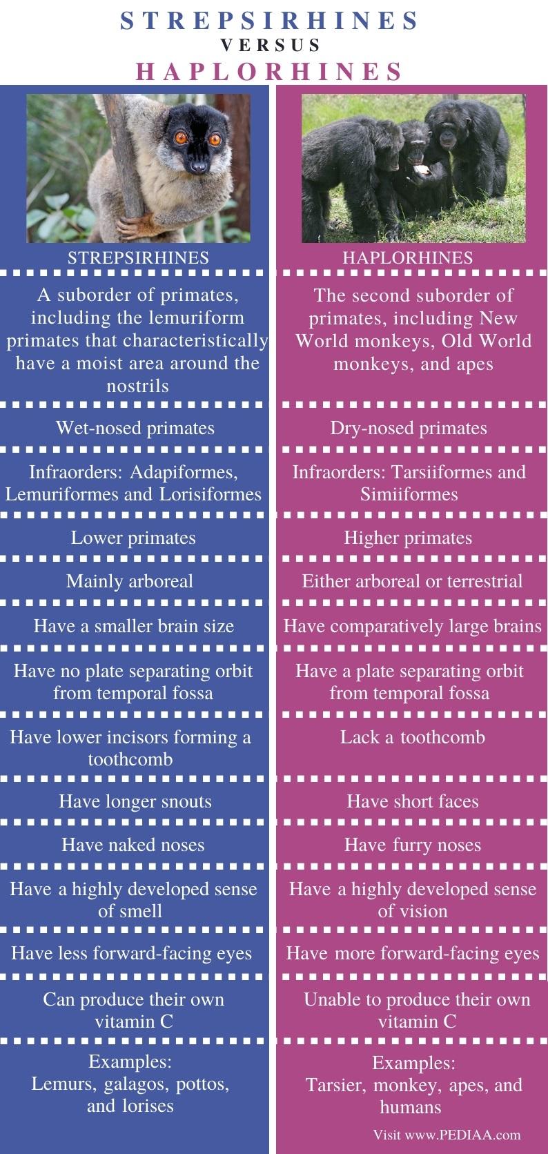 Difference Between Strepsirhines and Haplorhines - Comparison Summary