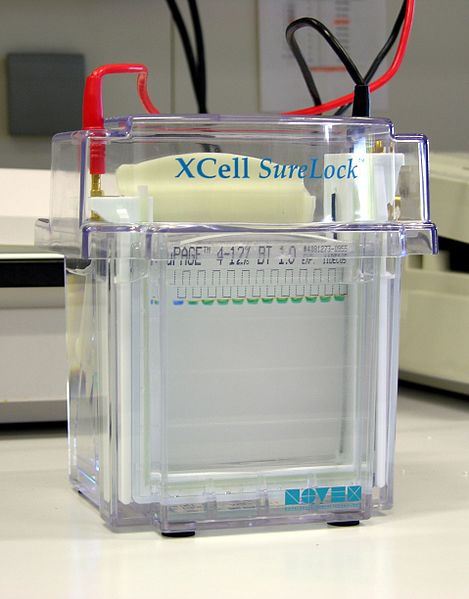 What is the Difference Between Agarose and Polyacrylamide