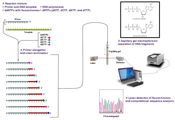 DNA Sequencing Procedure