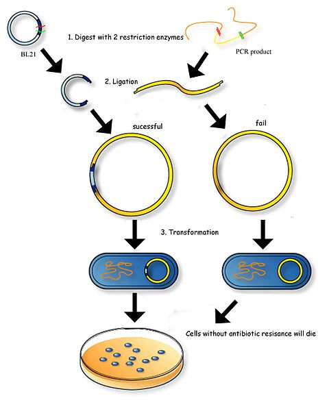 What is the Difference Between Restriction Enzymes Type 1 2 and 3
