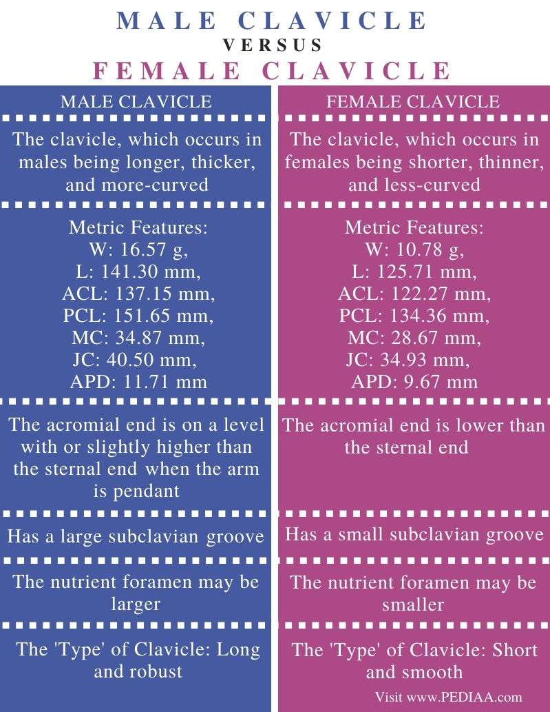 Difference Between Male and Female Clavicle - Comparison Summary