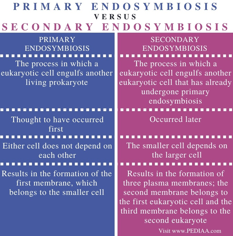 Difference Between Primary and Secondary Endosymbiosis - Comparison Summary