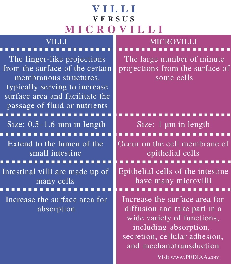 Difference Between Villi and Microvilli - Comparison Summary