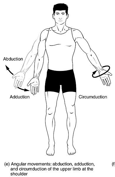 What is the Difference Between Abduction and Adduction