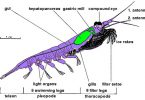 Difference Between Krill and Plankton