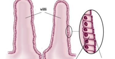 Difference Between Villi and Microvilli