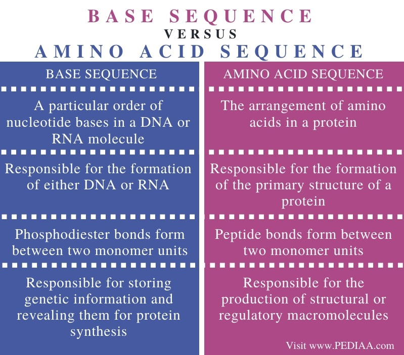 Difference Between Base Sequence and Amino Acid Sequence - Comparison Summary