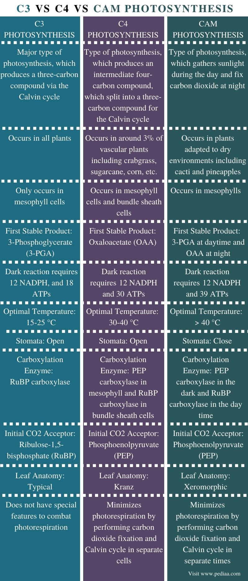 Difference Between C3 C4 and CAM Photosynthesis - Comparison Summary
